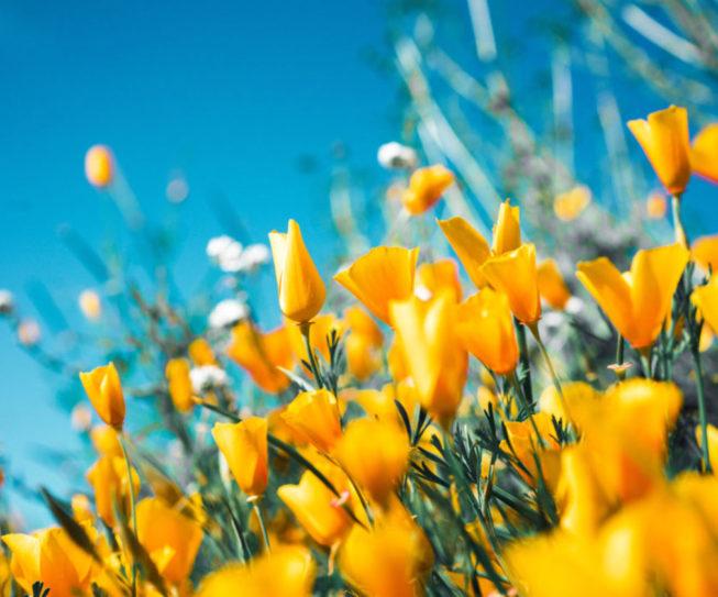 poesie-primavera-1200x840